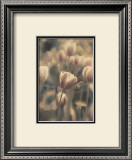 Tinted Tulips I Framed Art Print