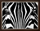 Black & White I (Zebra) Framed Art Print