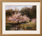 Buy Sheep Grazing Under Apple Blossoms at AllPosters.com