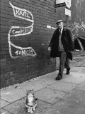 Tabby Cat on the Pavement - Salford 1981