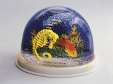 Close-Up of Figurines of a Sea Horse and a Fish in a Snow Globe