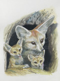 Close-Up of a Fennec Fox with its Cubs in a Den (Fennecus Zerda)