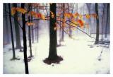 Quiet Woods