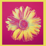 Daisy, c.1982 (Fuschia and Yellow)