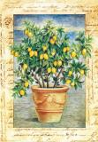 Fruti Mediterranei IV