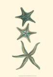 Buy Aquamarine Starfish I at AllPosters.com
