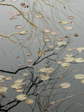 Abstract View of Lily Pads and a Willow Branch Reflected on a Pond