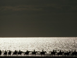 Vacationers Enjoy a Horseback Ride Along the Shore at Deauville