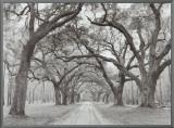 Buy Oak Arches at AllPosters.com
