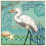 Shorebirds, Great Egret