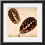 Maranta Leaves