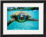 Honu, Turtle