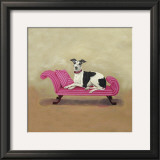 Italian Greyhound on Pink