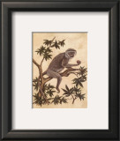 Monkey in a Tree I
