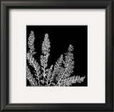 Black and White Ferns II