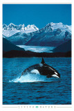 Buy Orca at AllPosters.com