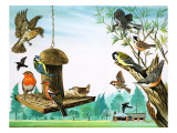 All Sorts of Birds around the Garden Table, Illustration from 'Once Upon a Time', 1971