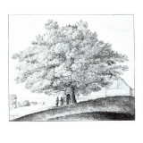 Hollow Tree at Hampstead, 1663