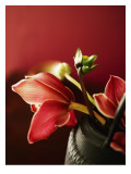 Ruby Tulips Brown Vase