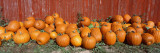 Pumpkins near the Wooden Fence