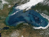 The Black Sea in Eastern Russia is Experiencing an Ongoing Phytoplankton Bloom