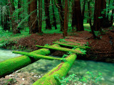 Buy Bridge Covered in Moss over Little Sur River at AllPosters.com