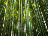 Bamboo Forest, Arashiyama-Sagano District