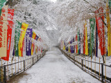Colourful Japanese Style Flags Along Walkway Leading to Daigoji Temple Complex after Snowfall