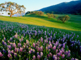 Carmel Valley in Spring