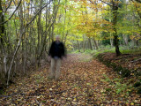 Autumn Stroll in a Home Counties Wood, North Downs