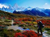 Trekkers Walking Through Autumnal Foliage Towards Monte Fitz Roy