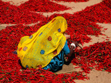 Woman Sorting Red Chillies Photographic Print