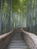 Stairway Through Bamboo Grove Above Adashino Nembutsu-Ji Temple Photographic Print