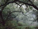 Buy Oak Tree Forest after Storm at AllPosters.com