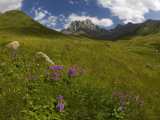 Wildflowers in Valley Beneath Mt Chaukhi