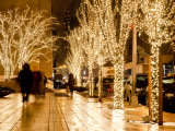 Trees Decorated with Lights at Night Fotografie-Druck