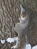 Squirrel on Tree Trunk in Central Park