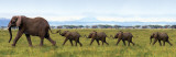 Buy Elephants-Linking Trunks at AllPosters.com
