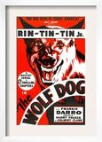 The Wolf Dog, Rin Tin Tin Jr., 1933