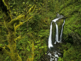Buy Triple Falls in the Mount Hood National Forest, Oregon, USA at AllPosters.com
