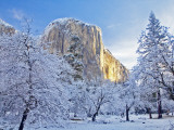 Sunrise Light Hits El Capitan Through Snowy Trees in Yosemite National Park, California, USA