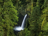 Buy Metlako Falls Along Eagle Creek in the Mount Hood National Forest, Oregon, USA at AllPosters.com
