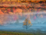 Misty Valley and Forest in Autumn, Davis, West Virginia, USA