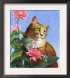 Orange Cat with Zinnia