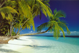 Buy Maldives Beach at AllPosters.com