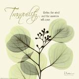 Buy Tranquility Eucalyptus at AllPosters.com