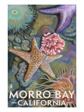 Buy Morro Bay, CA - Tidepool at AllPosters.com