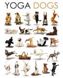 Yoga - Dogs Mini Poster