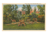 Buy Deer, Adirondack Mountains, New York at AllPosters.com