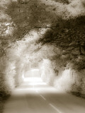 Buy Road in Autumn at AllPosters.com